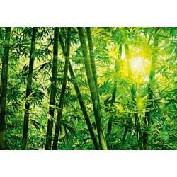 FOTOTAPET BAMBOO FOREST 123